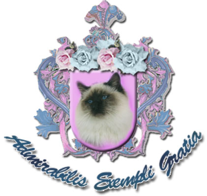 Myingyan Gems Birmans Cattery - Sacred Cat of Burma | Florida